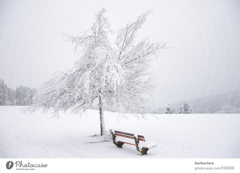 Erstes 2014 | Auf 1000 m Höhe Landschaft Himmel Winter Schnee Baum Wald Schwarzwald Bank frisch hell kalt weiß Stimmung Freude ruhig ästhetisch bizarr