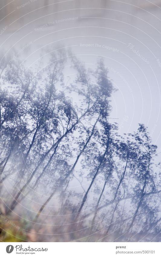 blue reflexion Umwelt Natur Landschaft Pflanze Baum Sträucher blau grau Winter Zweig Experiment Tag Reflexion & Spiegelung Zentralperspektive