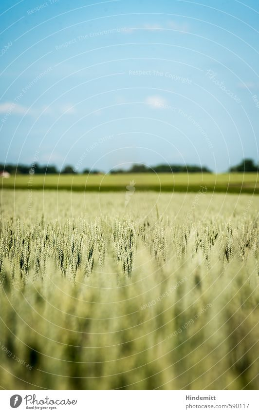 Sommer ist, ... Himmel Natur blau grün Pflanze Wolken Wald Umwelt Leben hell Feld stehen Klima Wachstum Schönes Wetter