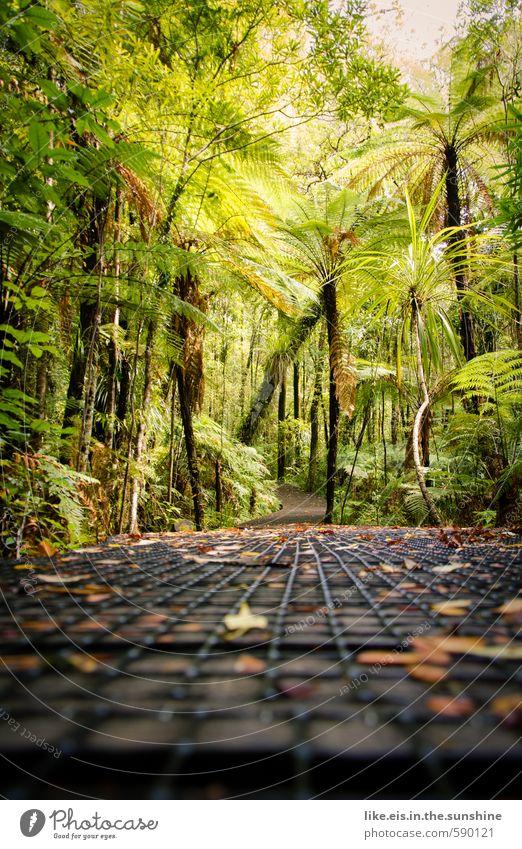 die mammutbäume: nächste links Natur Ferien & Urlaub & Reisen grün Pflanze Sommer Baum Erholung Einsamkeit Landschaft ruhig Ferne Umwelt natürlich Sträucher