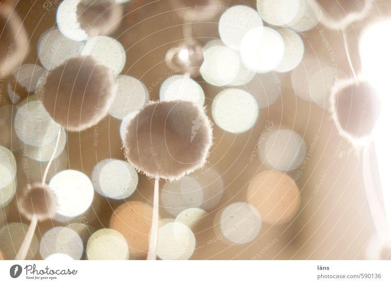 Bommel Dekoration & Verzierung glänzend leuchten außergewöhnlich weich braun einzigartig Punkt hängend Ball Kugel kugelrund Farbfoto Innenaufnahme abstrakt