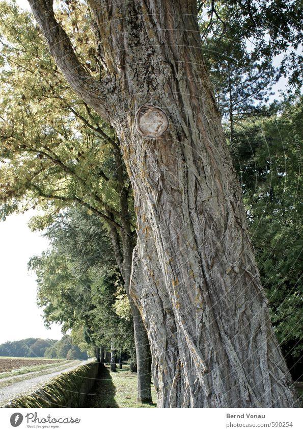 Alter Weggefährte Sommer Pflanze Baum Park Feld alt braun grau grün schwarz weiß Baumrinde Mauer Strukturen & Formen Wegrand Zeit Vergangenheit Lebensalter