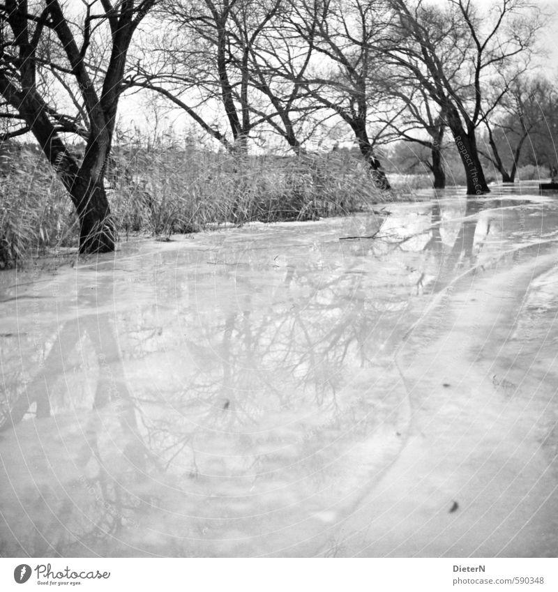 Spiegel Natur Landschaft Wasser Winter Klima Eis Frost Baum Seeufer Flussufer glänzend kalt schwarz weiß Wasseroberfläche Reflexion & Spiegelung Linie
