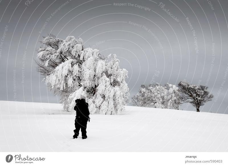 Buchen suchen Ausflug Mensch Mann Erwachsene 1 Umwelt Natur Landschaft Urelemente Himmel Gewitterwolken Winter Klima schlechtes Wetter Eis Frost Schnee Baum