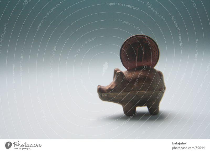 Glücksschwein Schwein Ferkel Sau Pfennige Geldmünzen Glückspfennig Symbole & Metaphern Glücksbringer Verlauf Hoffnung Religion & Glaube pig porky piggy Erfolg
