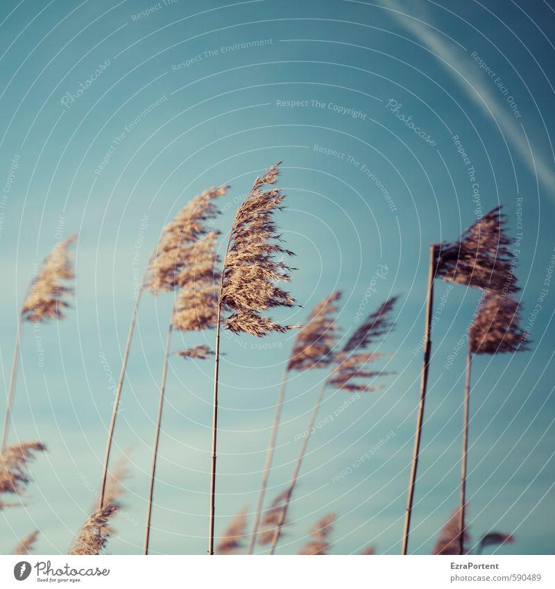 Puschel Umwelt Natur Landschaft Pflanze Himmel Sonne Herbst Winter Klima Schönes Wetter Gras Küste Seeufer ästhetisch natürlich schön blau braun gelb gold Wind