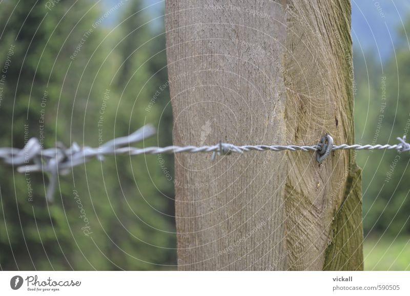 Eingezäunt im Stacheldraht Feld Wald Holz Metall wandern Baumstamm Farbfoto Außenaufnahme Nahaufnahme Tag
