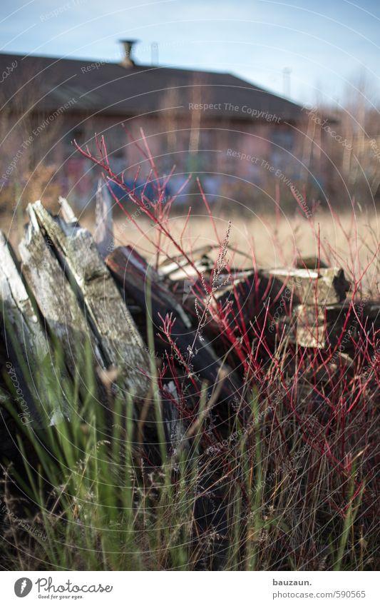 vordergründig verwirrend. Himmel Natur grün Pflanze Sonne rot Winter Graffiti Wiese Herbst Gras Gebäude Holz Linie Garten braun