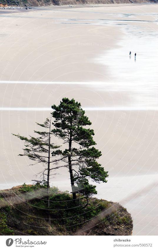 Tiny little people Freiheit Strand Mensch 2 Sand Wasser Baum Farbfoto Außenaufnahme Tag Vogelperspektive