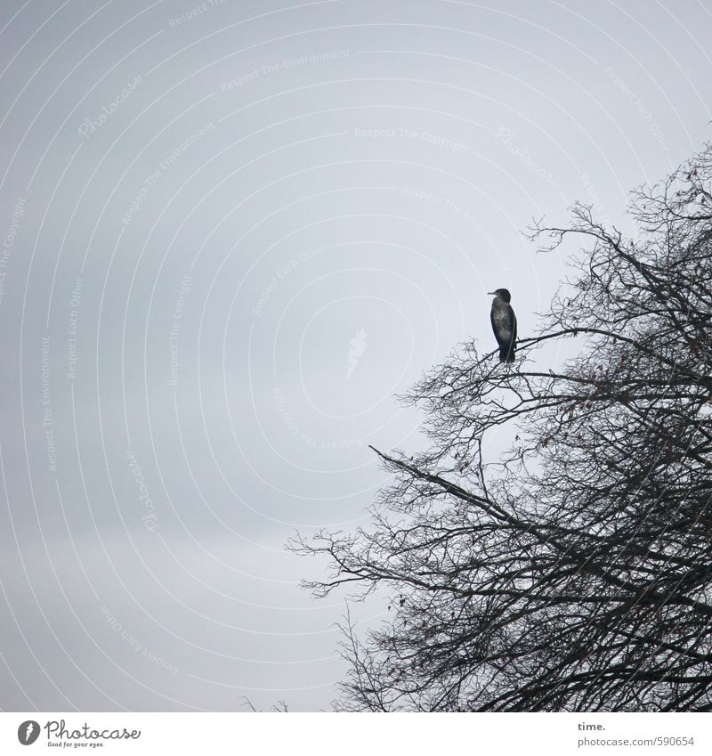 Brautschau Himmel Natur Baum Erholung Landschaft ruhig Wolken Tier Umwelt Vogel Zufriedenheit sitzen Wildtier Perspektive beobachten Pause