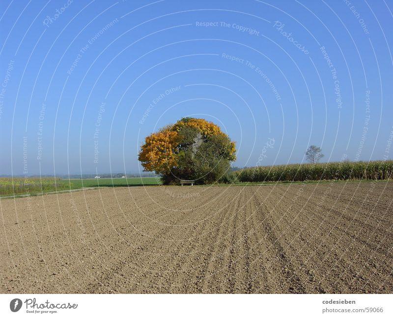 ...auf weiter Flur Kraft Feld unbebaut Ferne Pflanze schön mehrfarbig Baum Herbst monumental Physik heiß Himmel blau Sonne sonnentag Wetter Wärme Freude