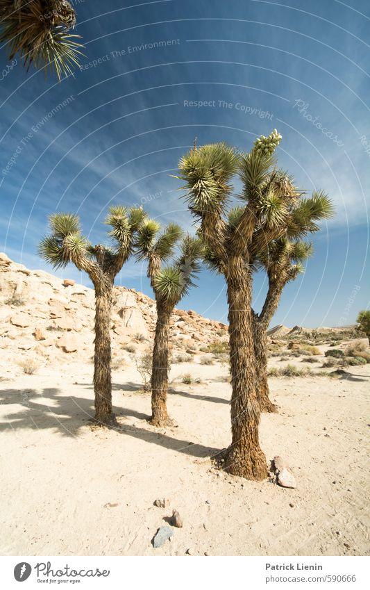 Joshua Tree Wohlgefühl Sommer Sommerurlaub Sonne wandern Umwelt Natur Landschaft Urelemente Luft Himmel Wolken Sonnenlicht Wetter Schönes Wetter Wärme Dürre
