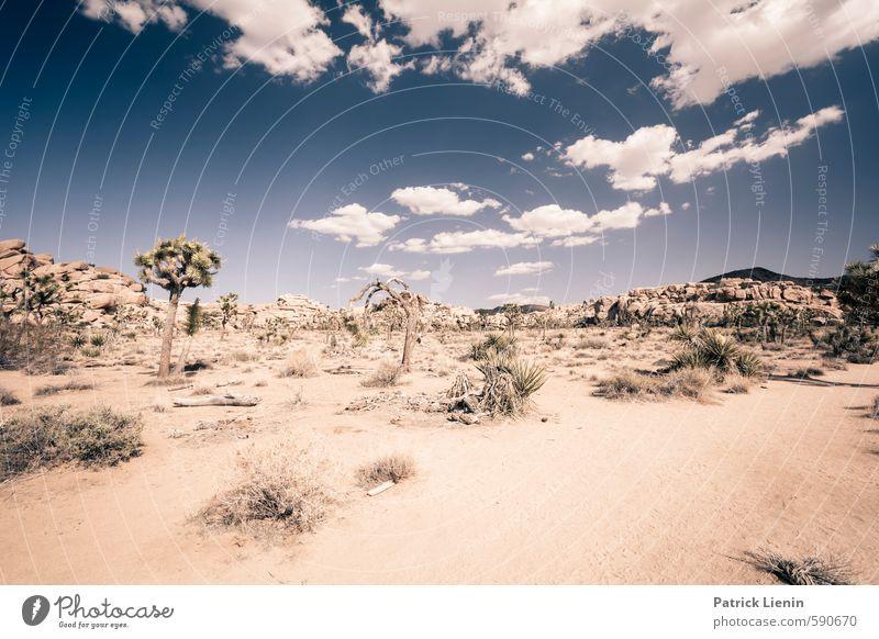 Bone Dry Himmel Natur Sommer Sonne Landschaft ruhig Wolken Ferne Umwelt Wärme Freiheit Sand Wetter Erde Zufriedenheit Sträucher