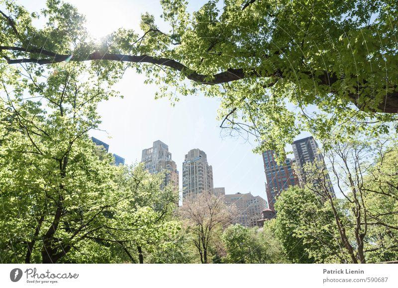 Central Park View Umwelt Natur Landschaft Urelemente Sonne Sonnenlicht Frühling Schönes Wetter Pflanze Baum Wald Stadt Stadtrand bevölkert Partnerschaft