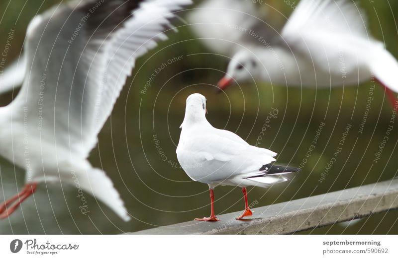 Möwen grün weiß Tier Bewegung Vogel fliegen stehen Schwarm