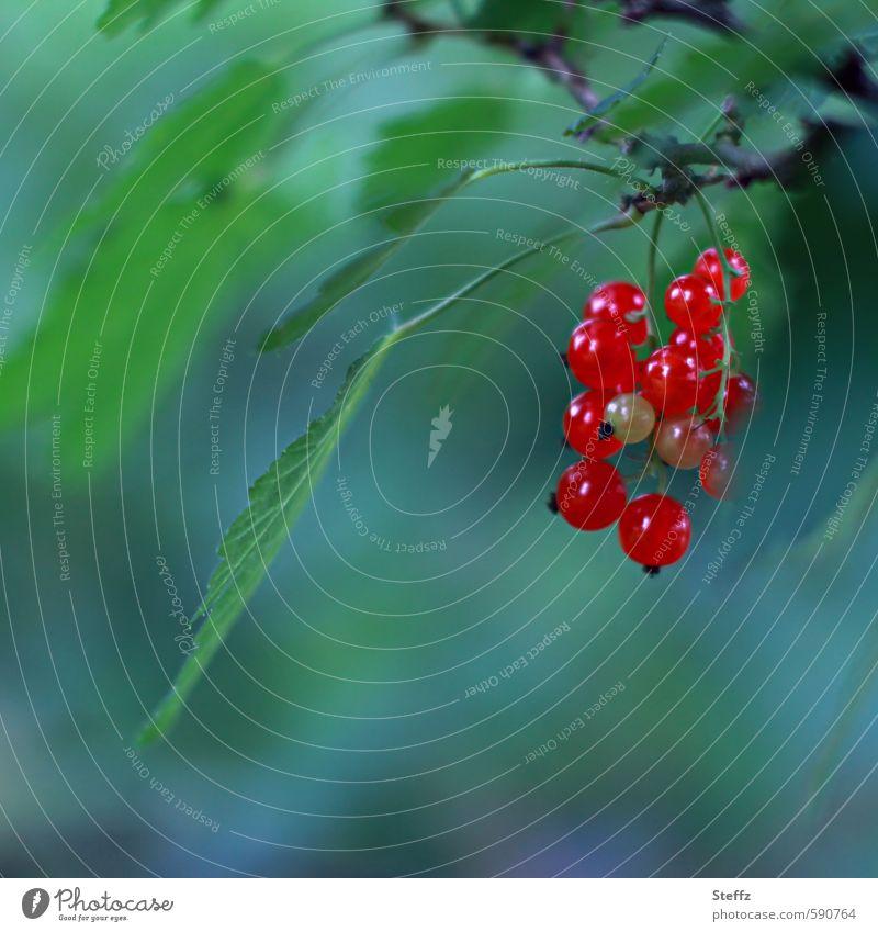 Sommerfrüchte Johannisbeeren Beeren Bio Früchte Saisonfrüchte rote Johannisbeeren rote Früchte Gartenfrüchte Beerensträucher gesunde Ernährung