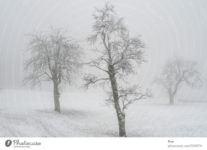 neblig Umwelt Natur Landschaft Wolken Winter Wetter schlechtes Wetter Nebel Eis Frost Schnee Schneefall Pflanze Baum Gras Grünpflanze Wiese Feld Hügel kalt