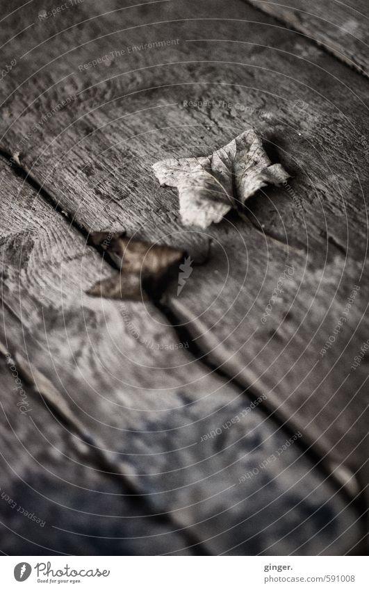 Köln UT | Pascha | Konservierter Herbst Umwelt Winter Klima Blatt braun grau vertrocknet Herbstlaub gekrümmt Holz Holzbrett Furche alt kalt Maserung liegen