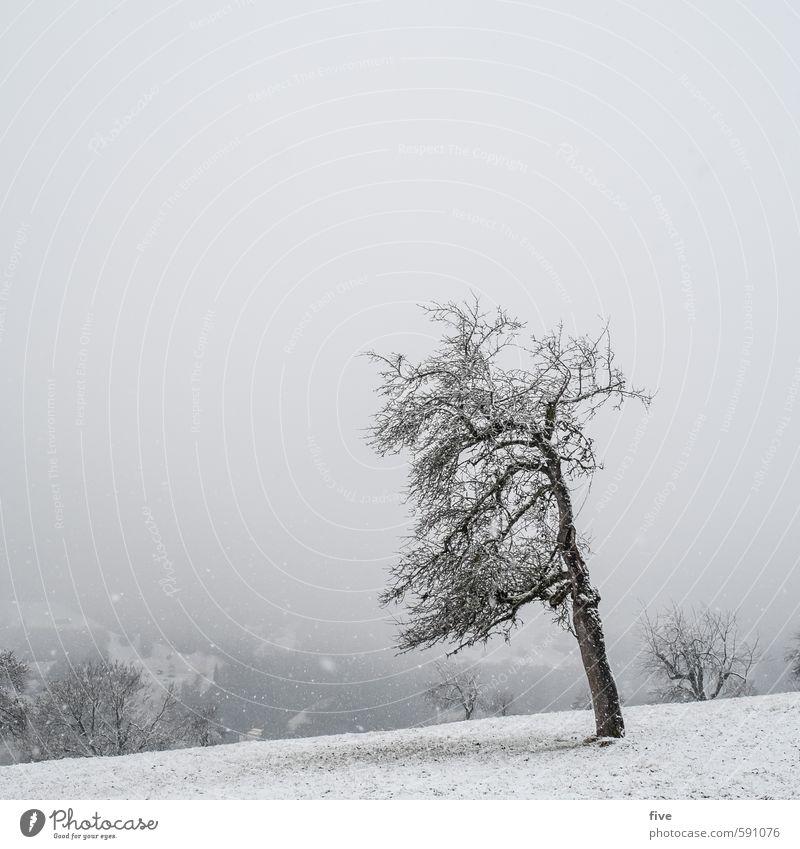 schneegestöber Umwelt Natur Landschaft Erde Himmel Wolken Winter Wetter schlechtes Wetter Unwetter Wind Nebel Eis Frost Schnee Schneefall Pflanze Baum Gras