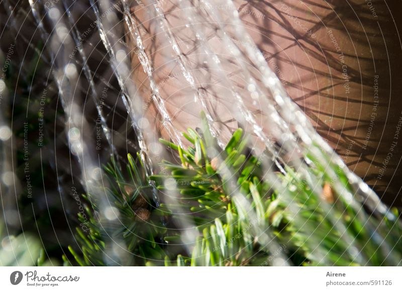 gut eingepackt bis nächstes Jahr... Winter Pflanze Baum Zweig Tanne Tannenzweig Nadelbaum Mauer Wand Verpackung Kunststoffverpackung Netz Netzwerk glänzend
