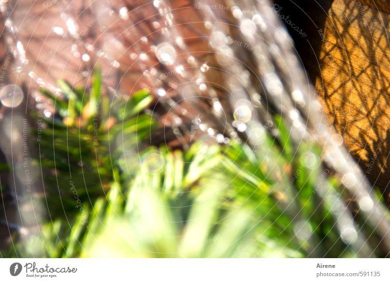 Verfallsdatum überschritten | best before 2013-12-24 Feste & Feiern Weihnachten & Advent Pflanze Baum Nadelbaum Tanne Tannennadel Tannenzweig Verpackung