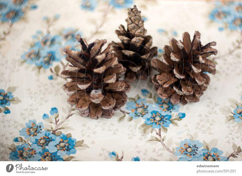 Drei auf einen Streich. Sammlung Winter Blume Blüte Wildpflanze Zapfen Holz gebrauchen fallen dehydrieren groß klein natürlich trocken wild blau braun