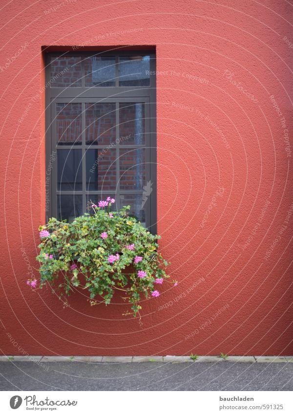 Fenster Grünpflanze Topfpflanze Stadt Menschenleer Haus Blühend grau grün rot Köln-Ehrenfeld Farbfoto Außenaufnahme Textfreiraum rechts Tag