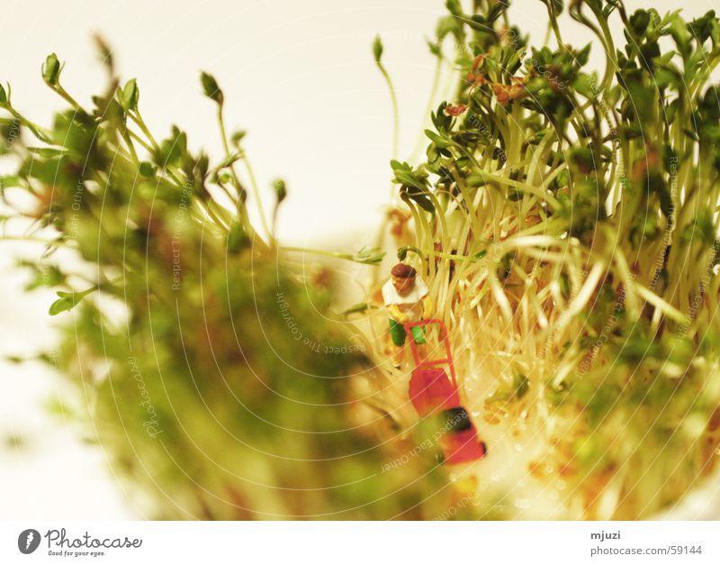 Gartenarbeit Kresse Rasenmäher Frühling frisch Aussaat grün Wachstum Gesundheit rasenmähen Wege & Pfade puppen arbeit gedeiehen Muster