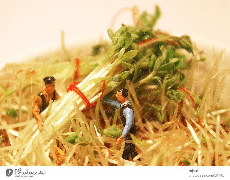 Kresse-Ernte grün Zusammensein Gesundheit Hilfsbereitschaft frisch Beruf Kräuter & Gewürze Ernte Landwirtschaft Bioprodukte Bündel Kresse