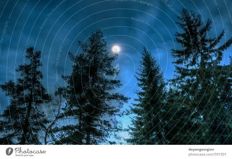 Himmel Natur blau Sonne Baum Landschaft Winter dunkel Wald Berge u. Gebirge Schnee See Nebel wild Jahreszeiten Abenddämmerung