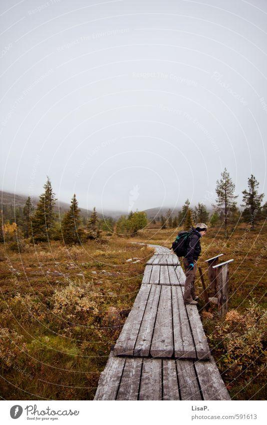 wandern. Mensch Himmel Natur Ferien & Urlaub & Reisen Pflanze Landschaft Ferne Wald Erwachsene Umwelt Herbst Freiheit Denken Freizeit & Hobby maskulin Nebel