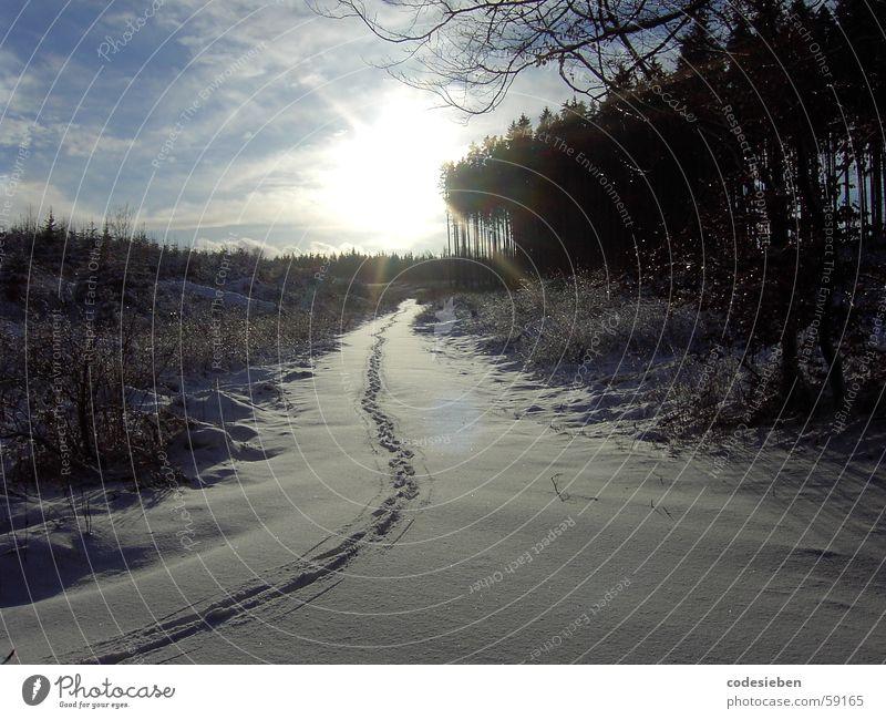 Footprints... Natur schön weiß Sonne Freude Winter Wolken Tier Wald Schnee Freiheit Stimmung Spuren Fußspur abgelegen sichtbar