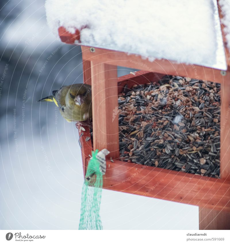 Imbiss im Schnee Natur Tier Winter Garten Schneefall Vogel Eis Wildtier beobachten Frost Fressen füttern Tierliebe Futterhäuschen Vogelfutter