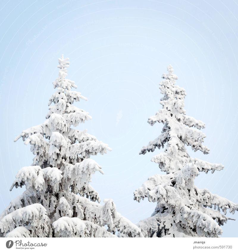 Spitze Natur schön Baum Winter kalt Schnee hell Eis einfach Frost Zeichen Jahreszeiten Wolkenloser Himmel Baumkrone Winterurlaub Fichte