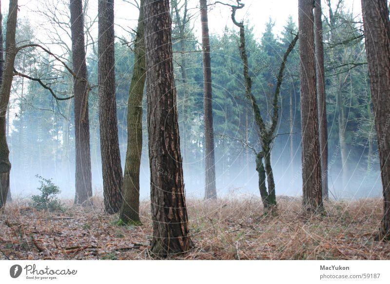 Nebel des Grauens... Baum Wald Angst Nebel gruselig