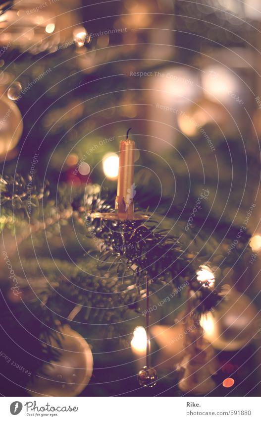 Letzter Weihnachtsgruß. Winter Wohnung Dekoration & Verzierung Weihnachten & Advent Baum Tannenzweig Weihnachtsbaum Kerze Kugel glänzend schön Kitsch Wärme gold