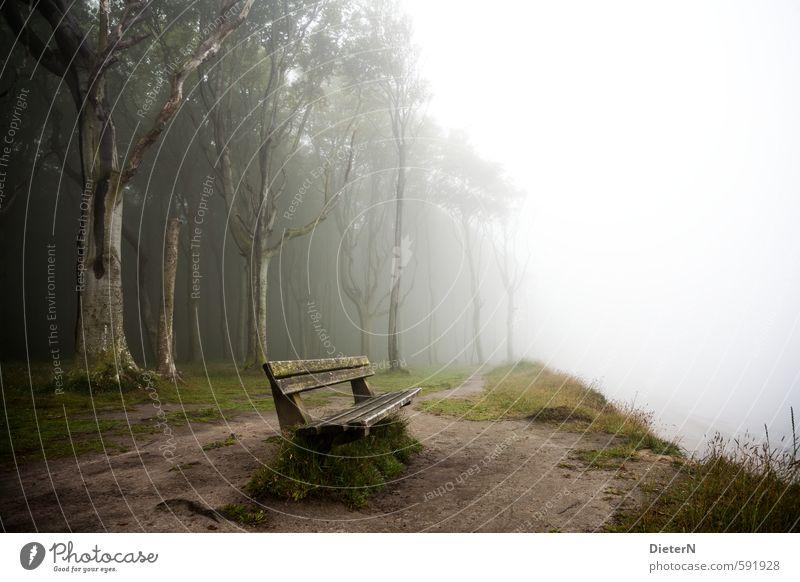 Nebelbank grün weiß Baum Umwelt Gras braun Nebel Bank Ostsee Gespensterwald
