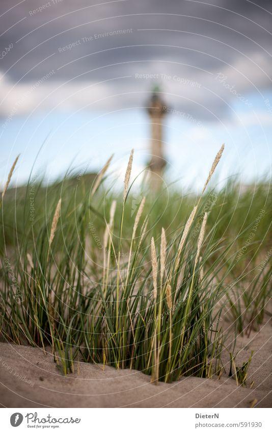 Strandhafer Landschaft Sand Wolken Sommer Pflanze Gras Küste Ostsee blau gelb grün Leuchtturm Warnemünde Stranddüne Farbfoto Außenaufnahme Menschenleer