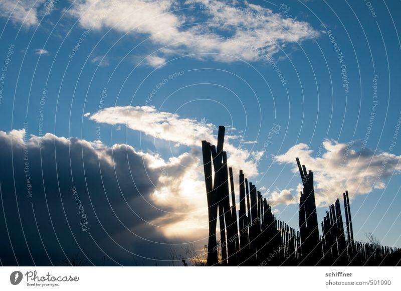 Schön der Reihe nach Landschaft Himmel Wolken Gewitterwolken Sonne Sonnenaufgang Sonnenuntergang Sonnenlicht Schönes Wetter Pflanze Nutzpflanze Feld blau Stock