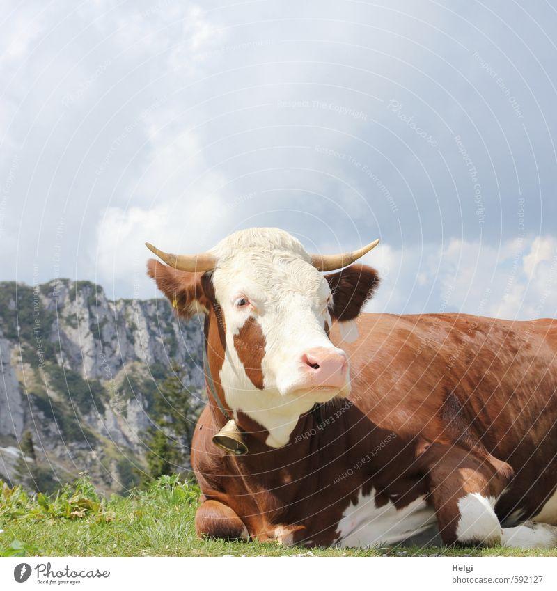 Erstes 2014 | Topmodel vom AST6... Ferien & Urlaub & Reisen Berge u. Gebirge Bayern Umwelt Natur Landschaft Pflanze Tier Himmel Wolken Frühling Schönes Wetter