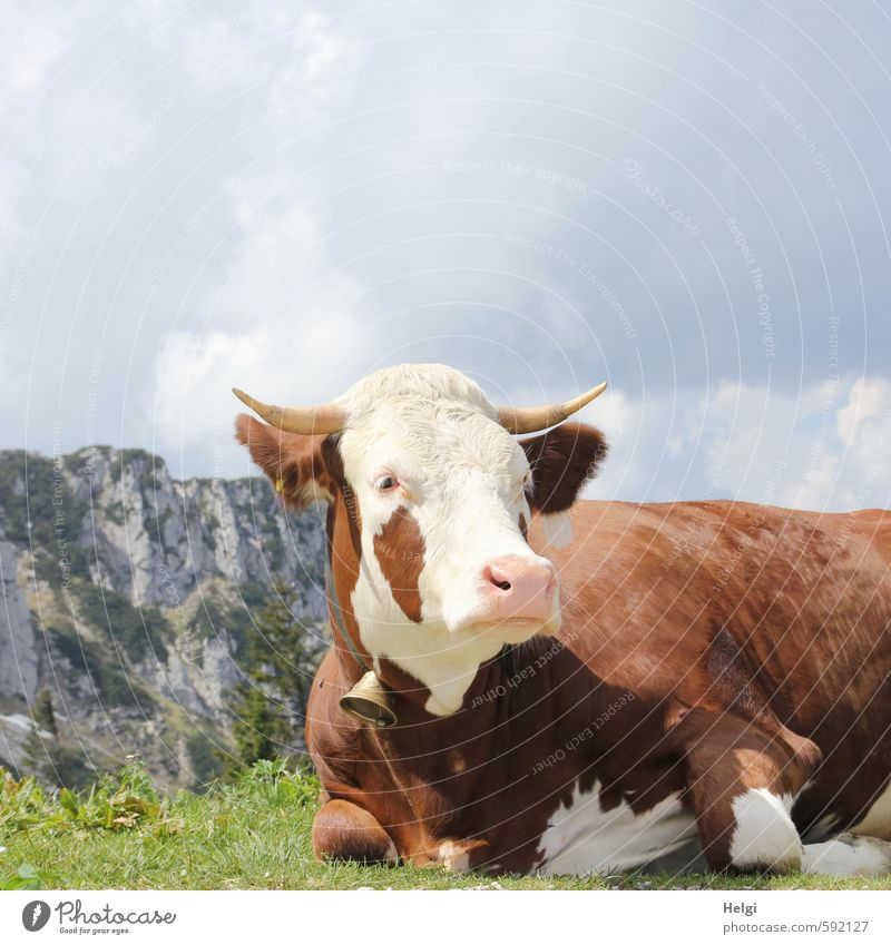 Erstes 2014 | Topmodel vom AST6... Himmel Natur Ferien & Urlaub & Reisen grün weiß Pflanze Landschaft Wolken Tier Umwelt Berge u. Gebirge Gras Frühling grau
