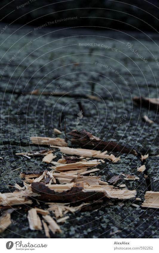 Treibholz Moos Flussufer Ast Pflastersteine Stein Holz Angespült zerschmettert kaputt liegen alt nass natürlich retro Sorge Einsamkeit Ödland Ende