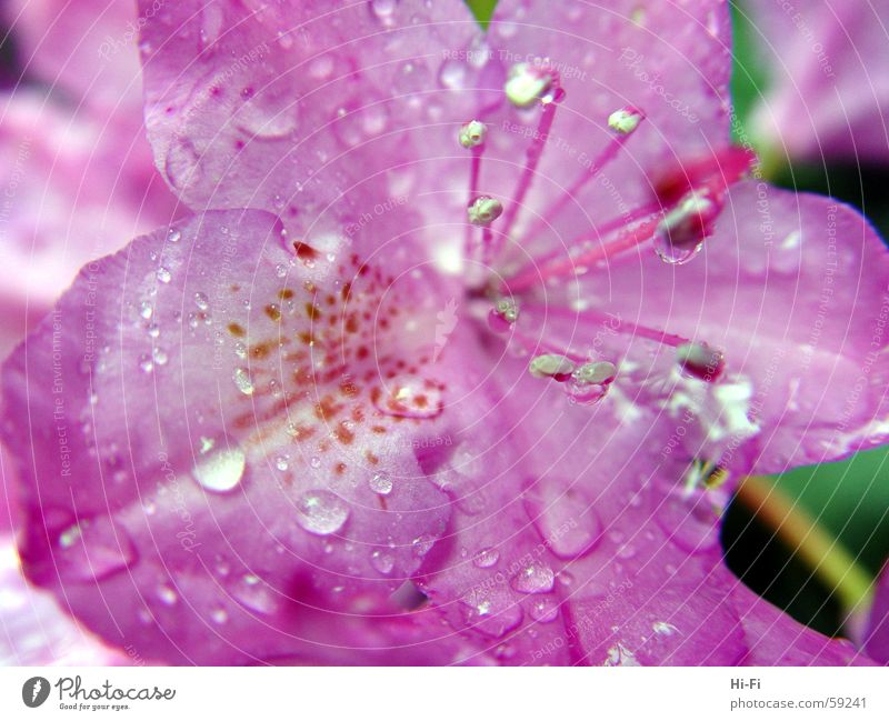 Nasse Blüte Blume Natur springen Frühling Wassertropfen Makroaufnahme Regenwasser nahaufname flower rain