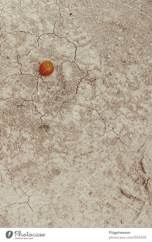 In der Wüste frischer O-Saft Ferien & Urlaub & Reisen Ferne Leben Essen Freiheit Lebensmittel Frucht Tourismus Ernährung Orange Ausflug Abenteuer Wohlgefühl