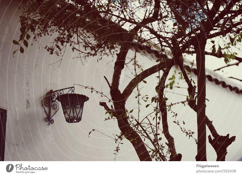Ich mach dir den Hof Freizeit & Hobby Häusliches Leben Wohnung Haus Traumhaus Garten Genusssucht genießen Erholung Bauernhof Baum Straßenbeleuchtung Lampion