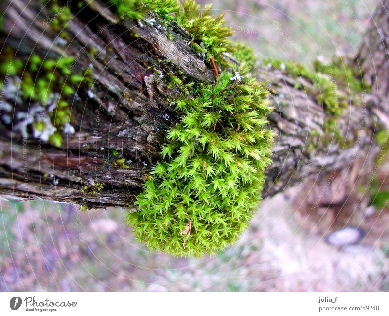 ich lach mir nen ast ab braun grün Pflanze Baumrinde Ast Natur Moos