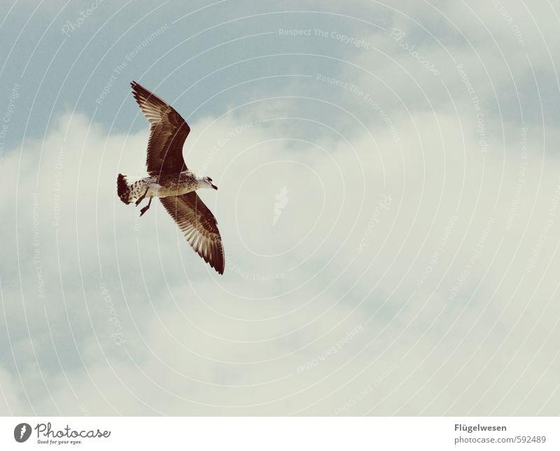 Möwenclick Ferien & Urlaub & Reisen Umwelt Natur Landschaft Pflanze Tier Himmel nur Himmel Wolken Klima Vogel Taube 1 fliegen fliegend Möwenvögel Möwendreck