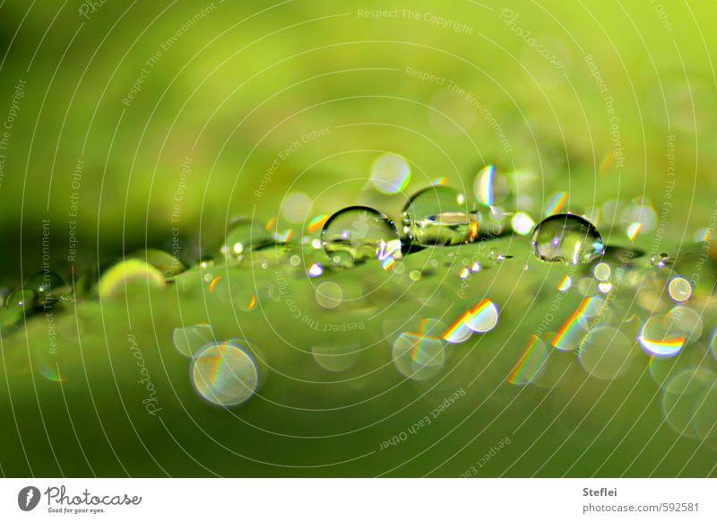 Tropfenkosmos elegant Wellness Meditation Wasser Wassertropfen Sonnenlicht Pflanze Garten Kugel glänzend Flüssigkeit frisch klein nass rund Sauberkeit grün