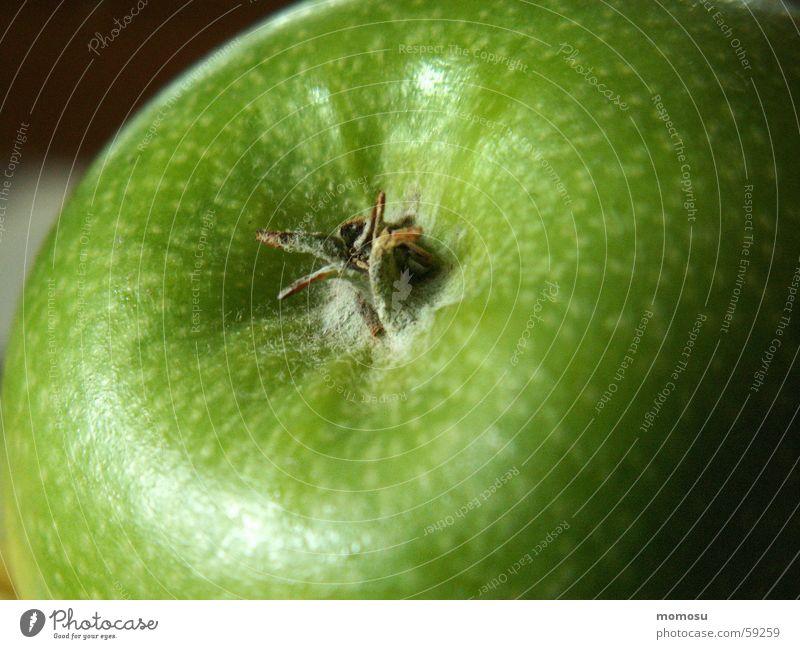 Beiß rein! Vitamin Gesundheit Apfel Frucht Granny Smith gesundgeit