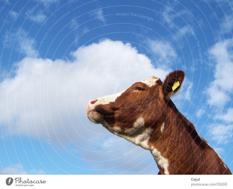 Dem Himmel entgegen Natur blau schön Sonne Sommer Tier Wolken Farbe Auge Gras braun Wetter Schilder & Markierungen Nase Ziffern & Zahlen
